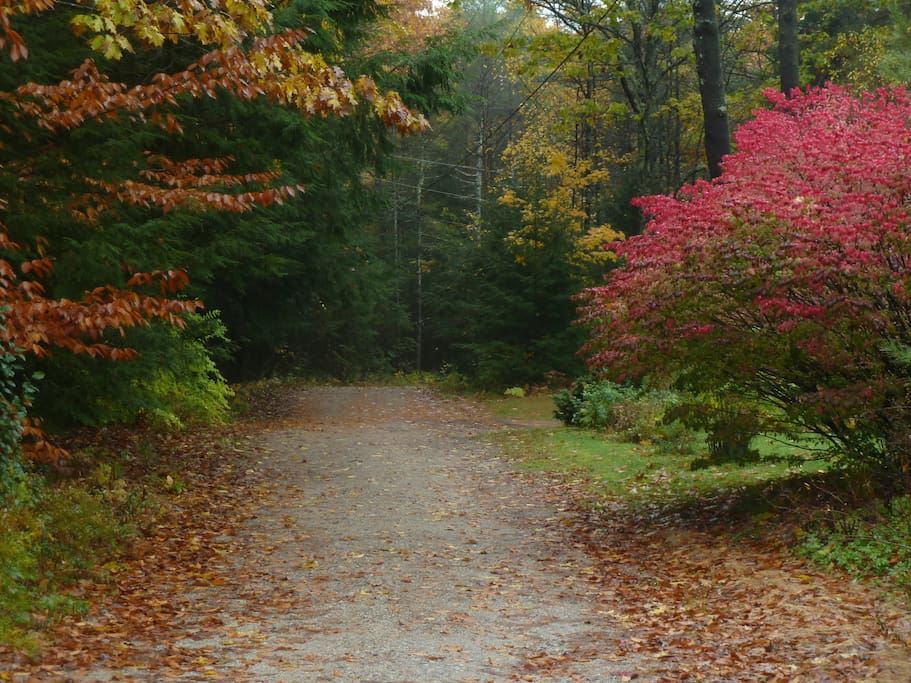 Private road:  Our driveway is beyond the red bush.