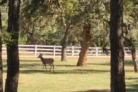 Deer Run Bed and Breakfast Hawk's Nest Suite - Austin