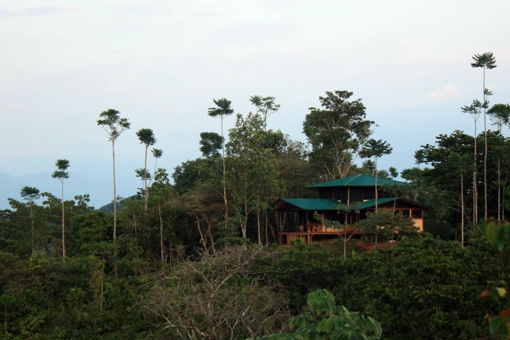 This hilltop home is completely immersed within lush jungle.
