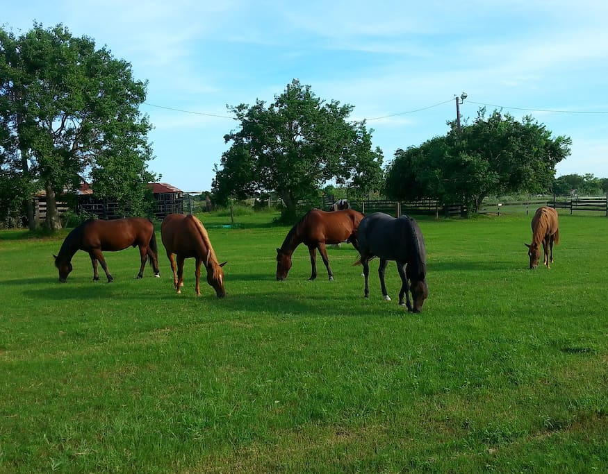 School horses in summer