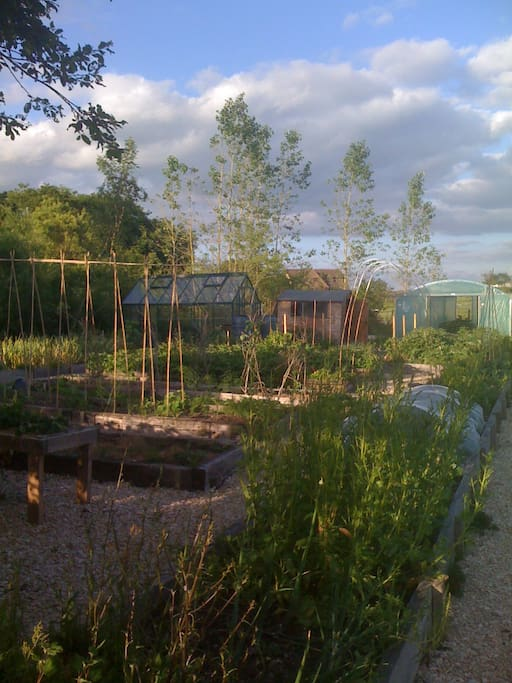 Our Organic Veg garden in full Bloom