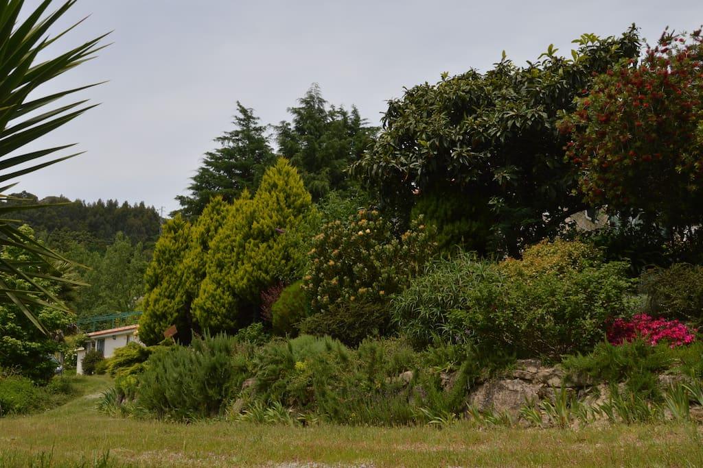 Jardim aromático
