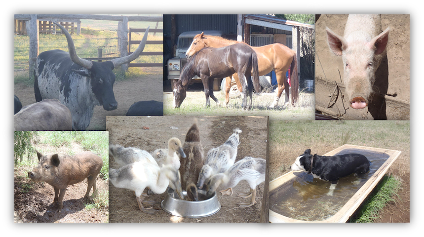 You might even get the chance to visit the farm animals, just ask!