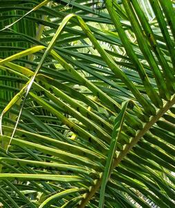 """""""Shangri La"""", entre palmeras y dunas"""