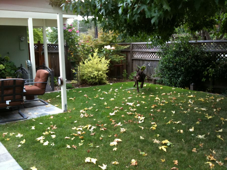 Front lawn, enclosed yard.
