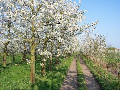 Sei zu Gast auf dem Obsthof