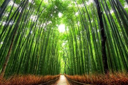 5min. walk from JR HANAZONO sta /E - Kyoto - Hus
