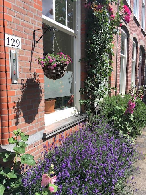 lavender - a flowery facade