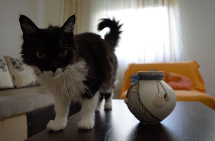 Meow House Apartment