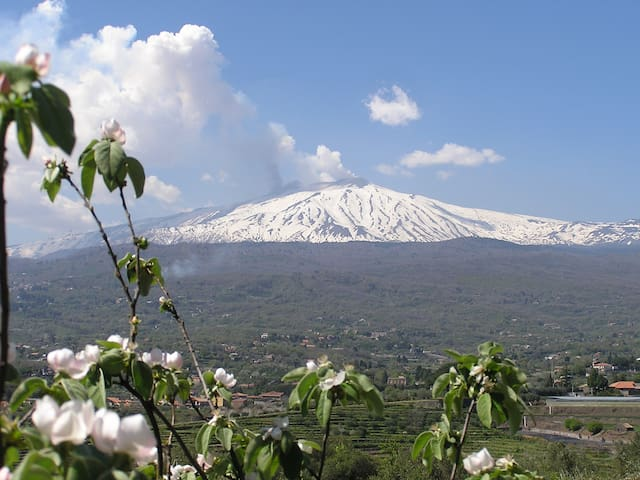 Family Eco Farm Facing Etna&Ocean - Piedimonte Etneo - Lodge immerso nella natura