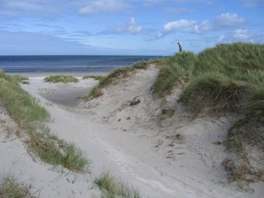 Ålbæk Strand