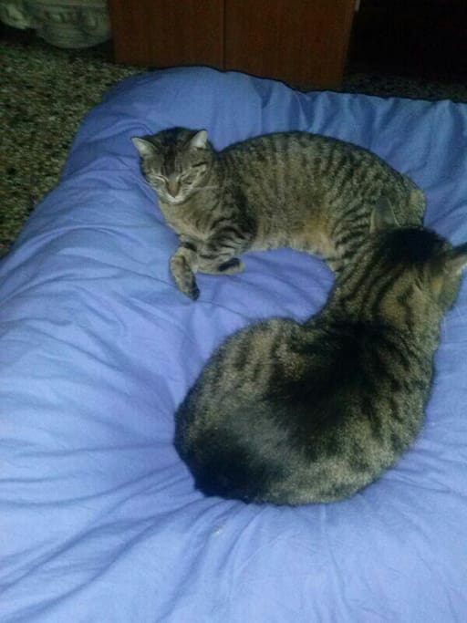 My cats :-)
