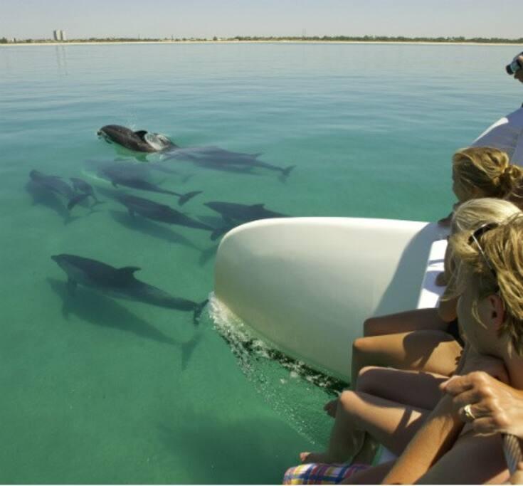 Golfinhos da Nossa Terra