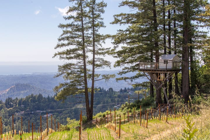 Treehouse in Vineyard Overlooking Monterey Bay - Los Gatos - Dům na stromě