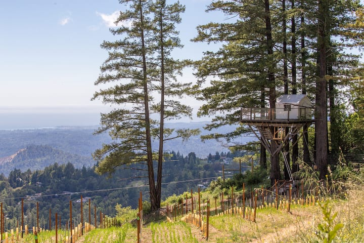 Treehouse in Vineyard Overlooking Monterey Bay
