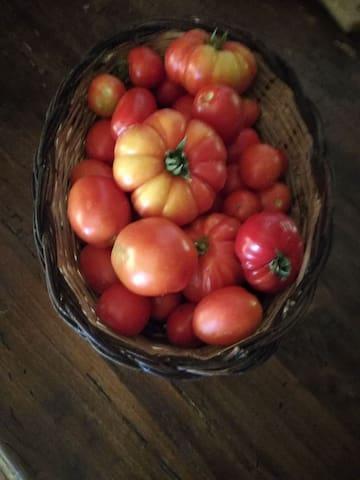 tomato from my garden