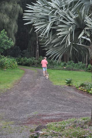 Walking up the driveway to the Ironwood forest. Many meditation spots in the forest to enjoy