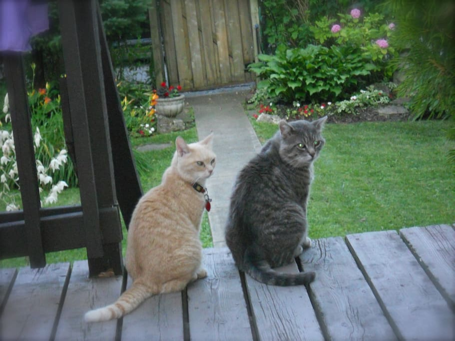 The welcoming committee.  Pet allergy ALERT.  The Grey cat guards the back door :-)
