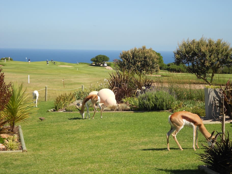 View from the apartment with springbok roaming the golf course