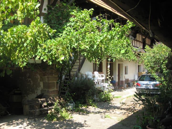 maison alsacienne dans village viticole
