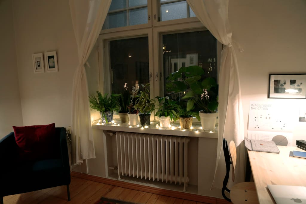 Front window with plants and holiday spirit