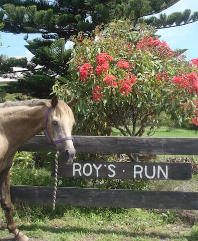 Roys Run. This is Roy. The property is named after Roy. He was a fabulous horse.