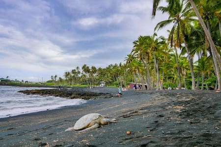 Turtle Paradise at Punalu'u Black Sand Beach