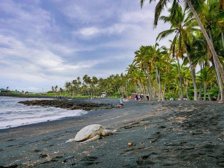 Turtle Paradise at Punalu'u Black Sand Beach