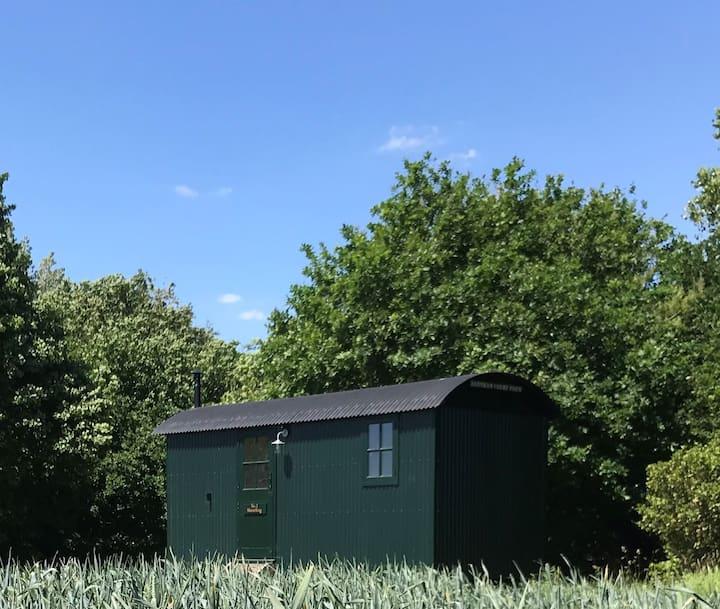 Hut 3 Shearling