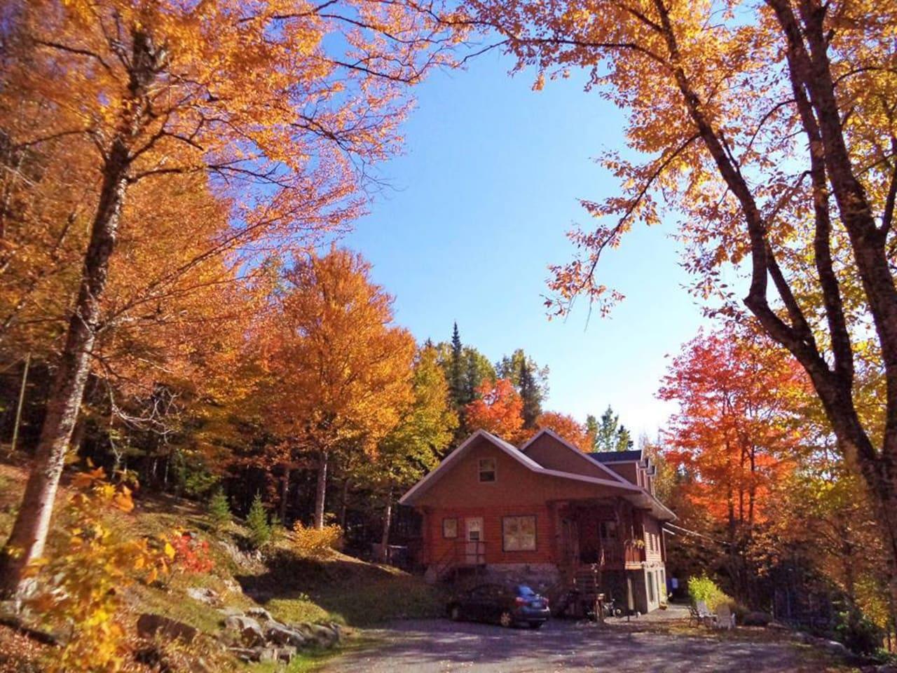 Les couleurs d'automne.