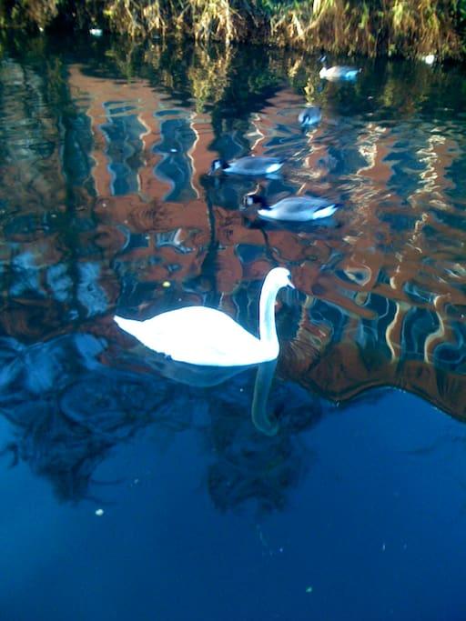 canal wildlife