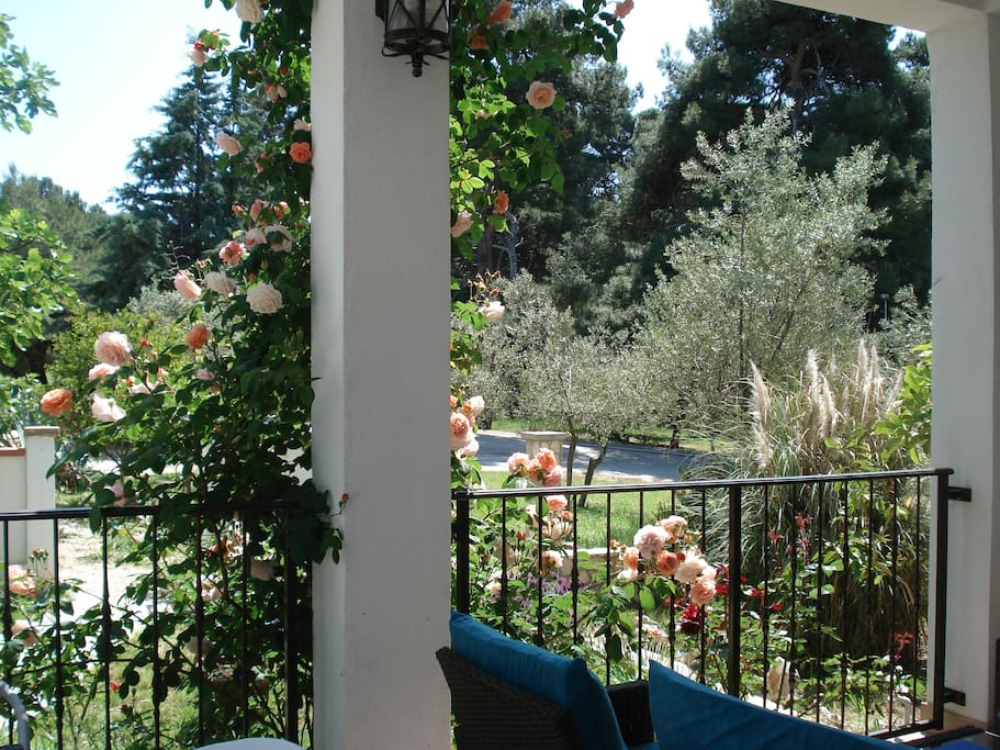 terrace in May