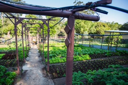 Organic Farm Retreat - Palmwoods