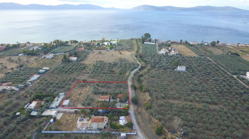The Greek countryside and the sea at once