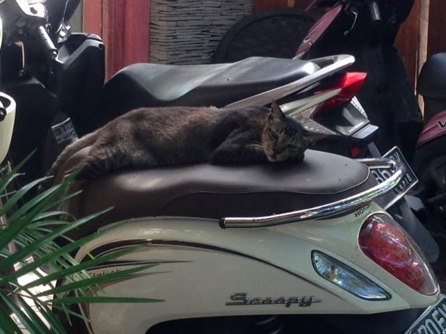 motorbike available for 50 rp/day