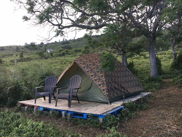 Camp on Haleakala (Maui) - Green - Tent provided