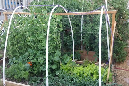Organic Urban Farm near Lake Mead & Hoover Dam! - Boulder City - Dům