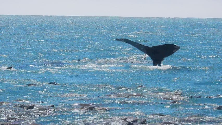 There are Whales in the Monterey Bay year-round. I took this photo on one of these tours.