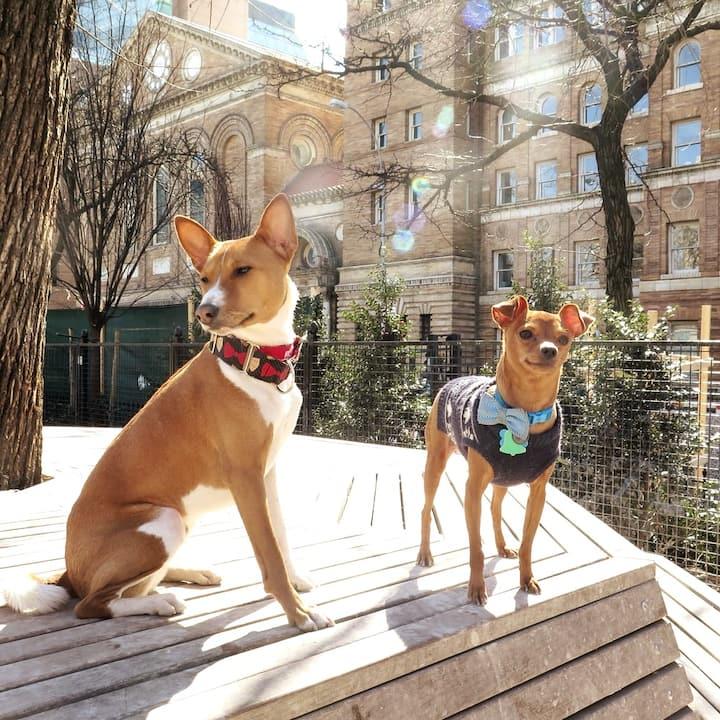 Friends at the dog run