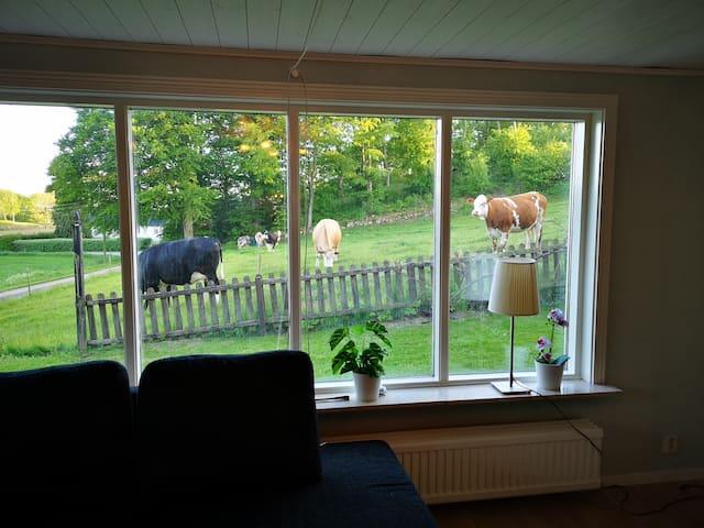 Härlig utsikt från vardagsrummet