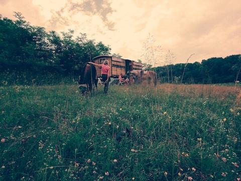 Camper Bee Wagon featured in NatGeo Traveler