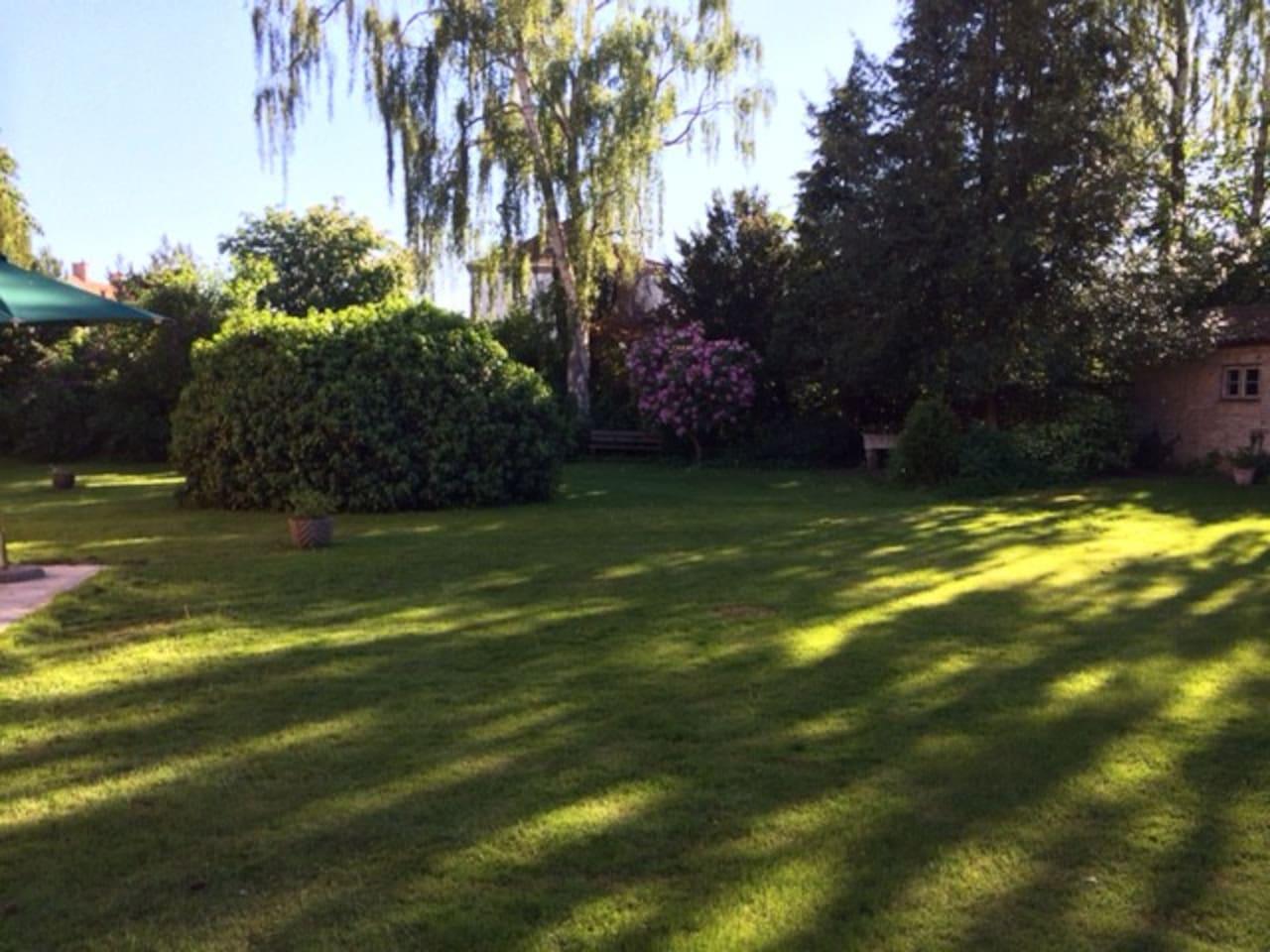 … and more garden