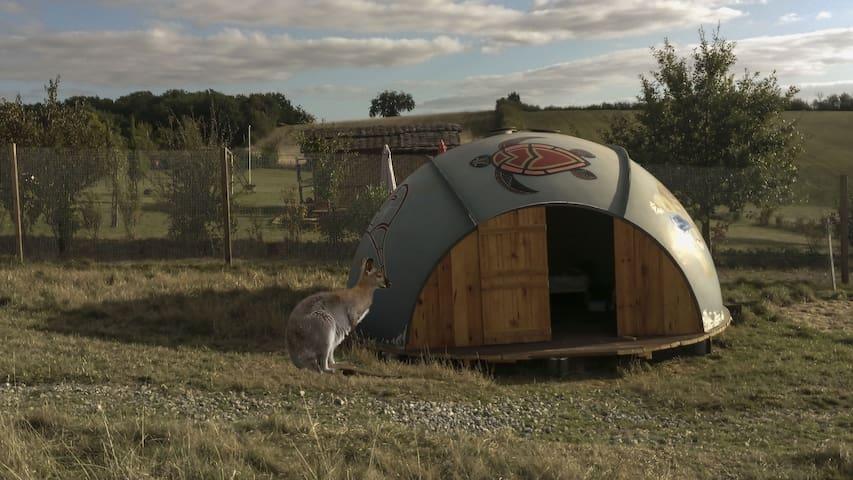 Une nuit chez les Kangourous (Repas compris)