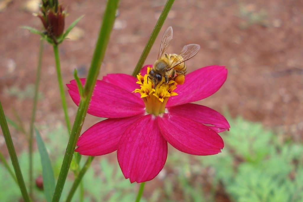 Abejita/ Bee