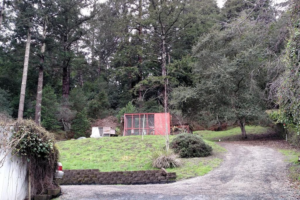 Top of property, chicken coop, beautiful trees and lush greenery