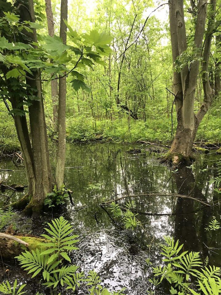 Sherwood Forest Farm
