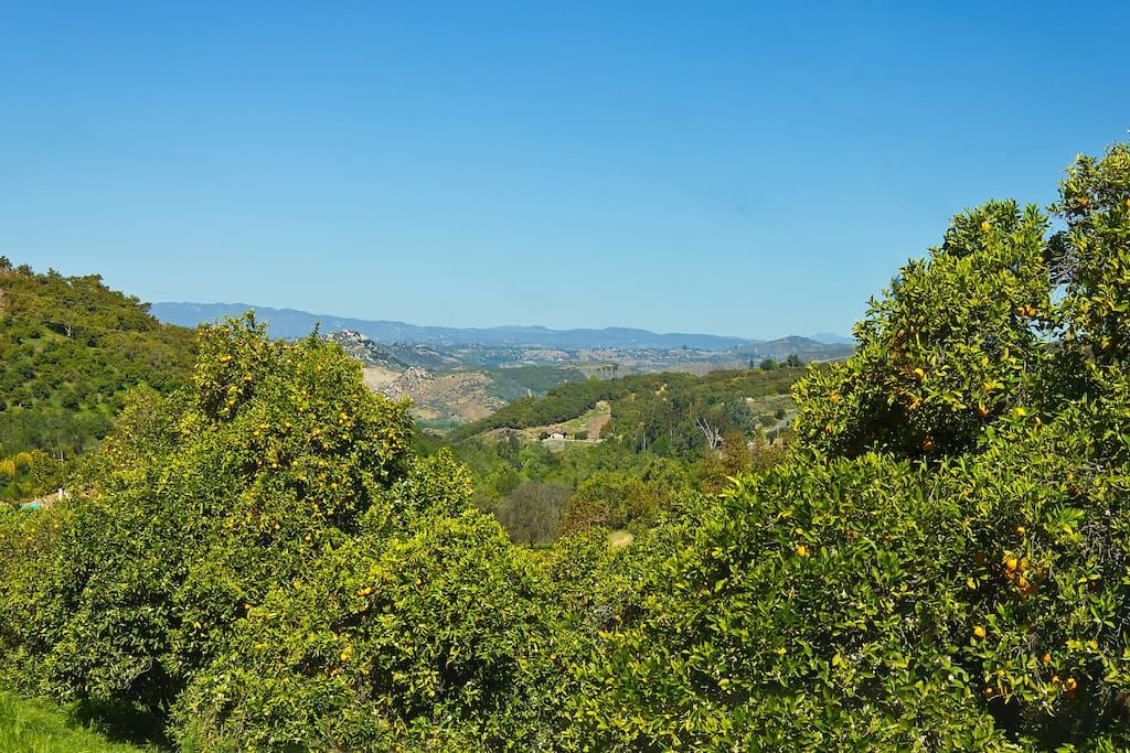 Endless views of San Diego's avocado and citrus groves