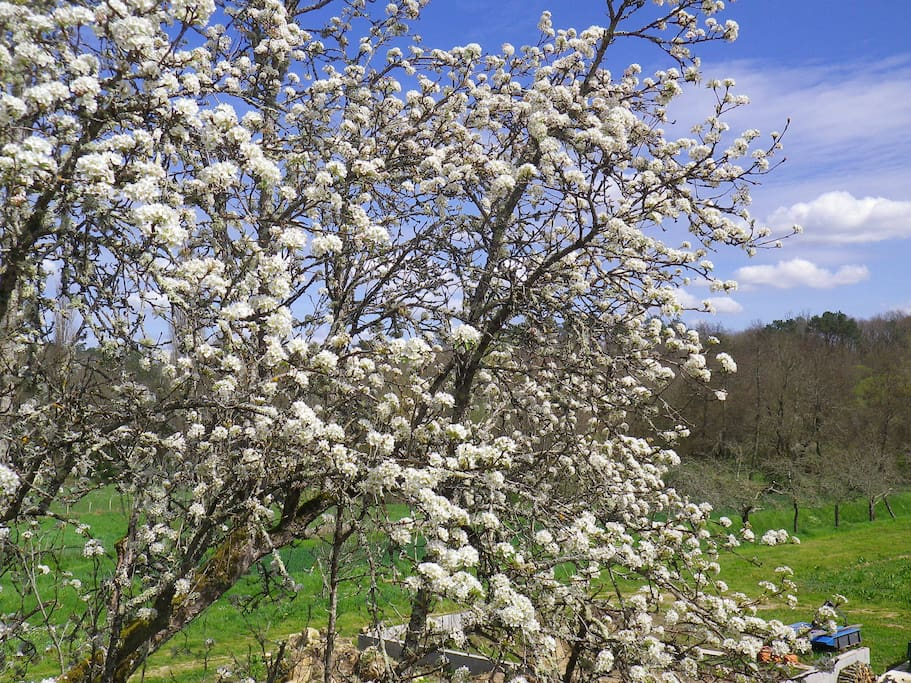 35 fruit trees here at Le Clos du Verger!