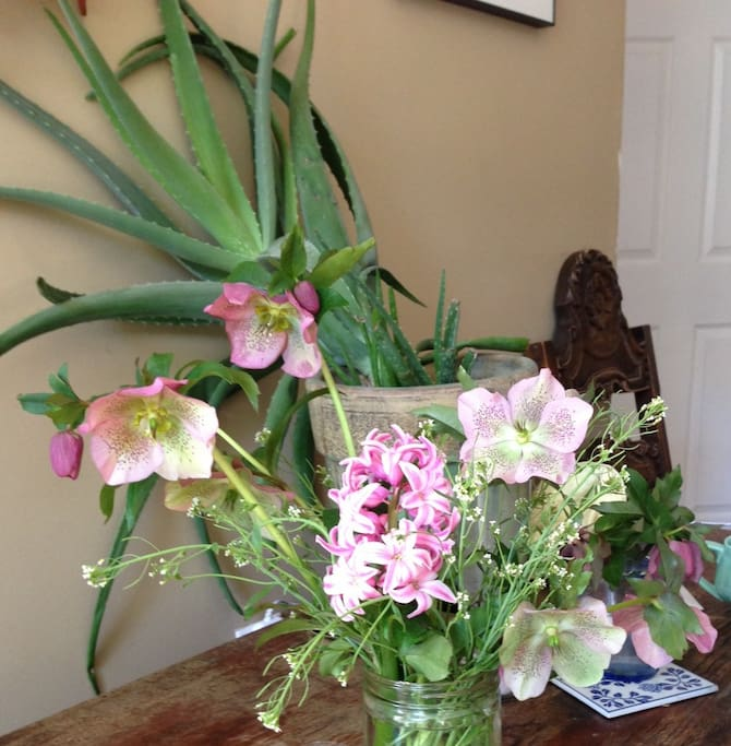 Spring Blooms from the Garden!