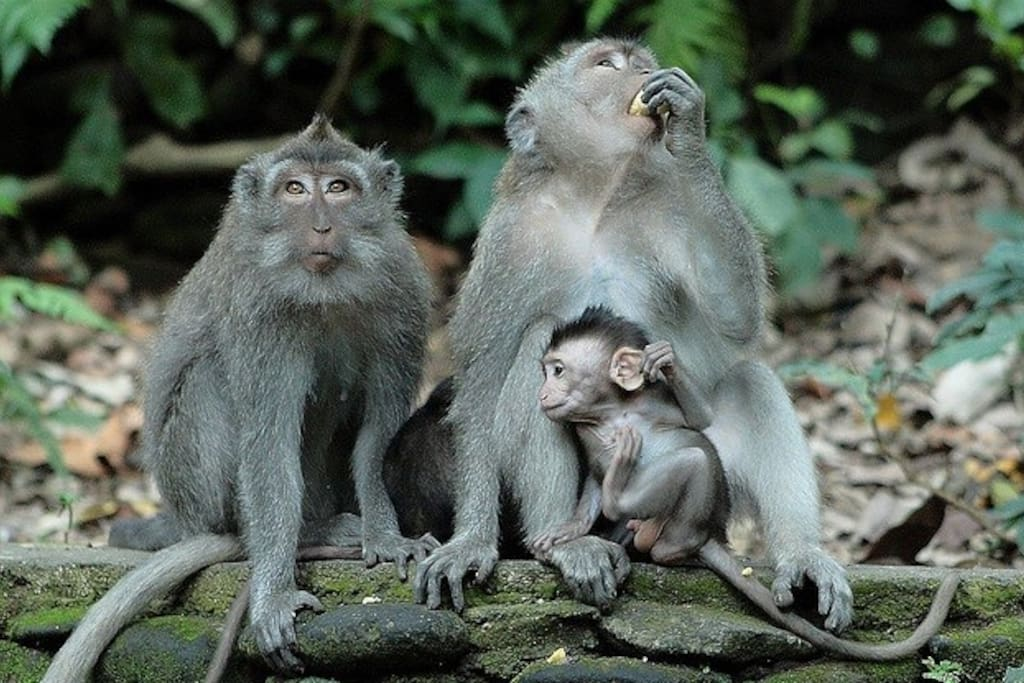The neighbours from Monkey Forest waiting for guests to arrive.